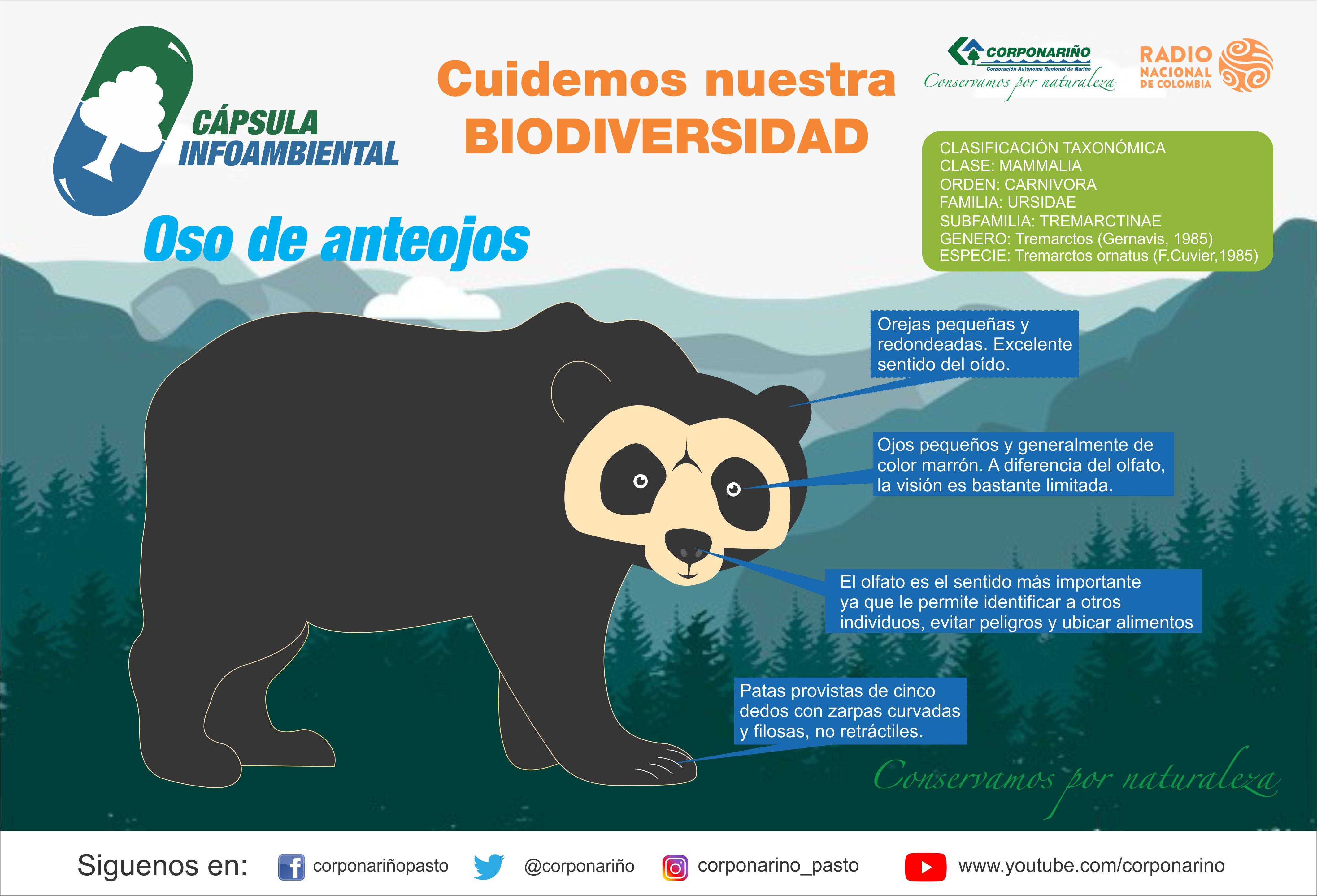 Capsula-Infoambiental-Oso-Anteojos